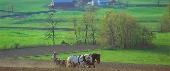 amish-farming-dy