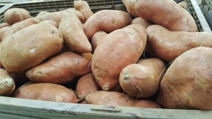 free sweet potato